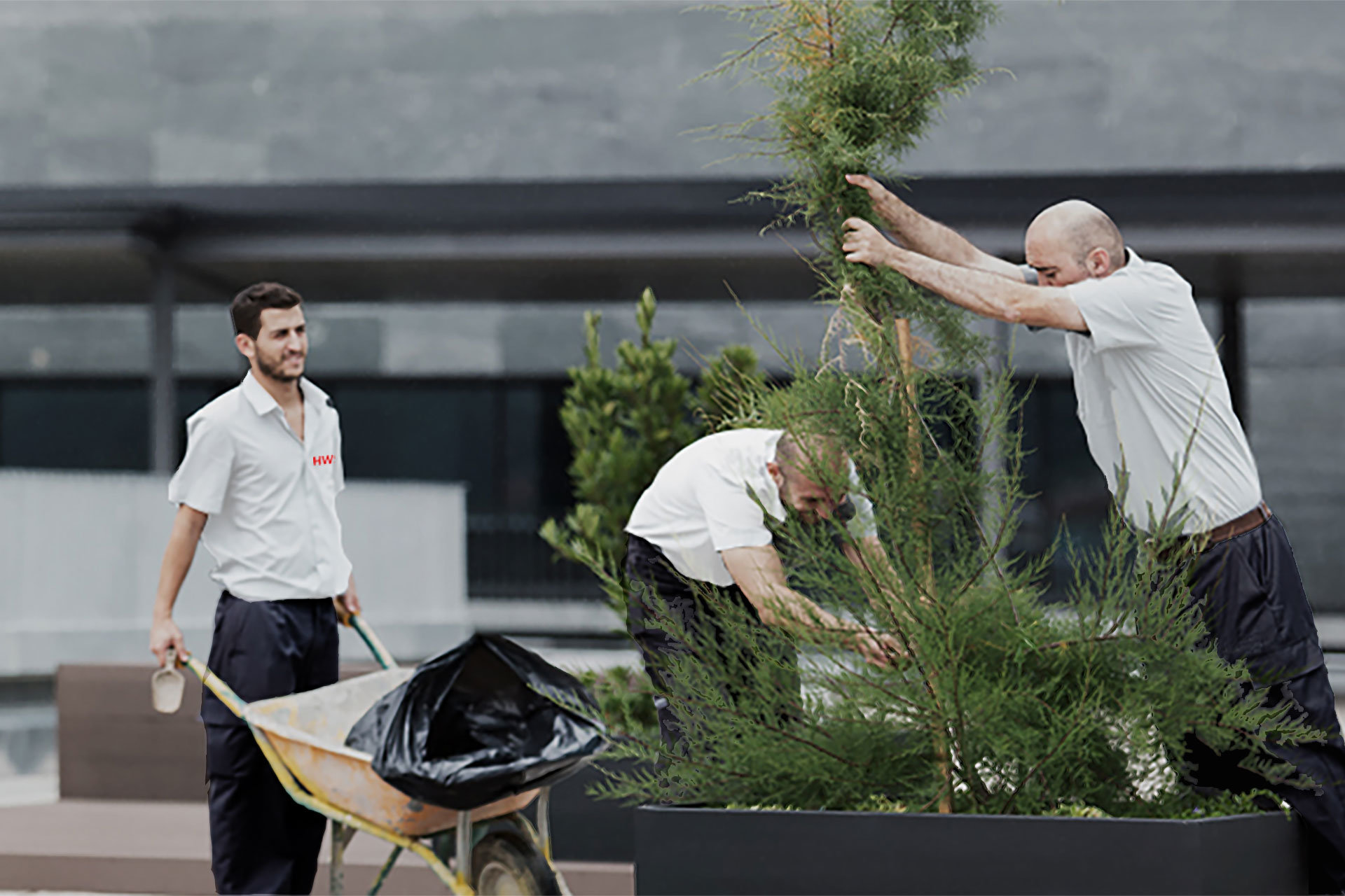 Gartenpflege mit grünen Daumen